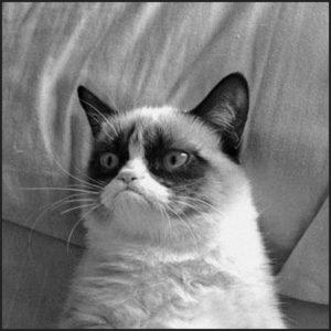 Grumpy Cat - Argentum47